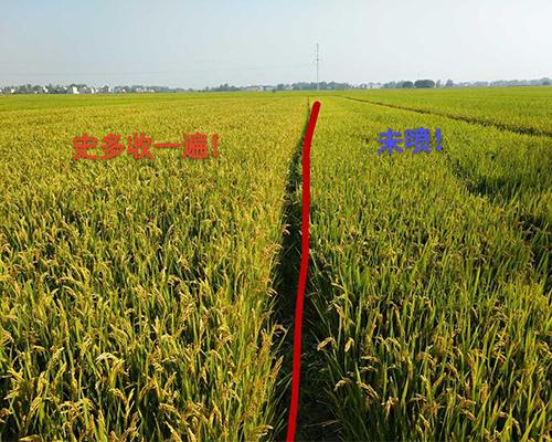 史多收一遍水稻