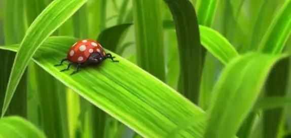 河南奈沃农业科技,叶面肥,农业增产神器